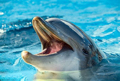 best and best dolphins and whales destinations in europe europe s
