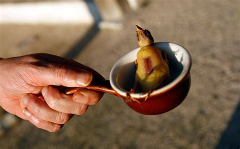 ortolan cuisine why chefs want us to eat this bird bones