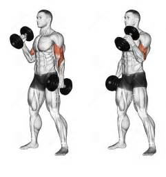 bodybuilder workouts to build the biceps and triceps all