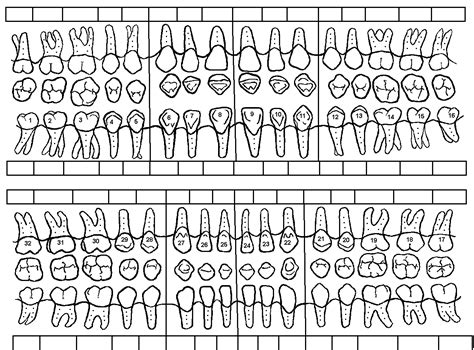 8 best images of tooth chart printable full sheet dental