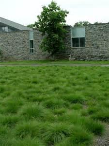 Sometimes the lawn mows you turfgrass vs low maintenance