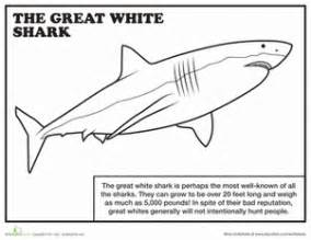 great sheets great white shark worksheet education com