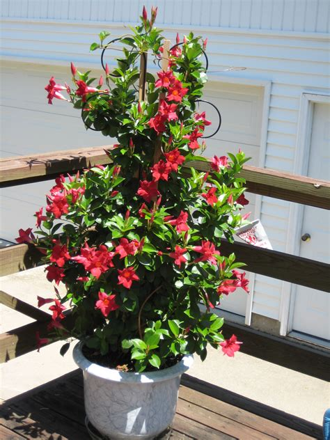 mark austin homes 187 blog archiv 187 sun loving container plants