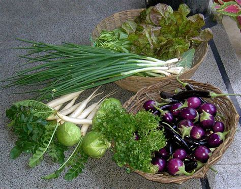 vegetables to europe grow european vegetables in india flickr photo