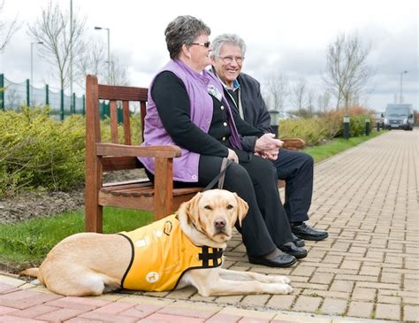 can dogs get dementia extraordinary dogs guide dogs for the mind the dogs being trained to give dementia