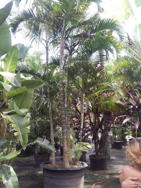 52 best images about florida wholesale plant nursery