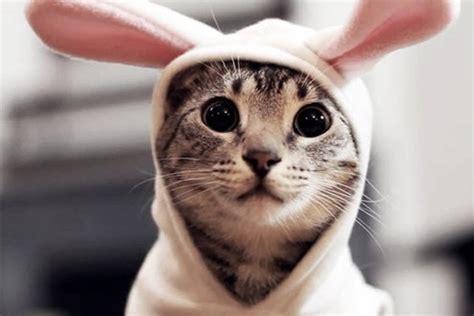 un gato y un 12 fotos de gatos con disfraces adorables