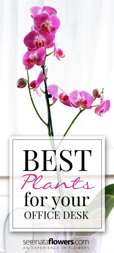 best plants for office desk best house plants for your office desk pollennation