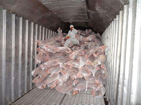 Frozen Fish Shelf by Transportation Of Frozen Fish Poti
