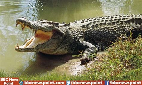 Top 10 Most Dangerous Animals by Top 10 Most Dangerous Animals In The World 2017