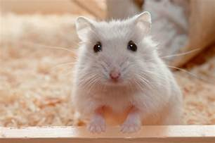 Organizing Small Spaces what is wet tail in hamsters