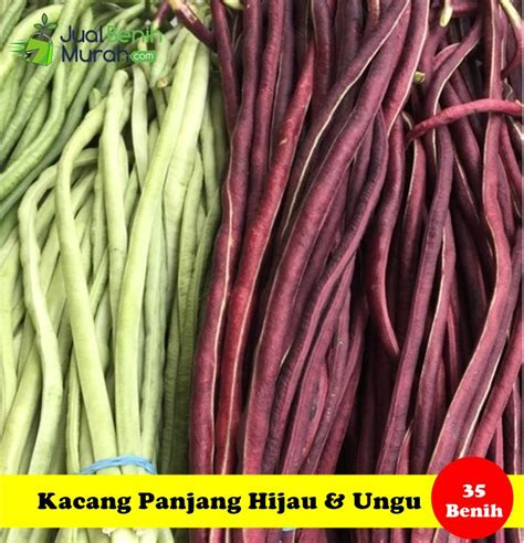 Maica Leaf Buah Strawberry Hijau Benih Tanaman 15 Benih kacang panjang maica leaf jualbenihmurah