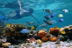 catamaran fort lauderdale bahamas key west day trip and catamaran snorkel adventure from