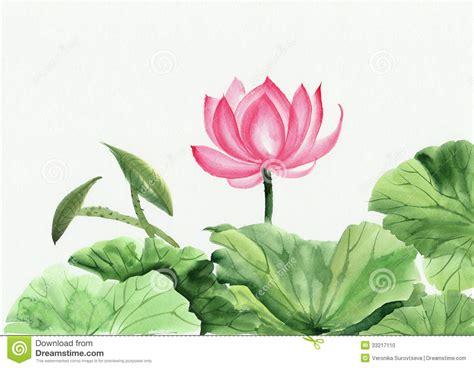 lotus flower painting designs 桃红色莲花水彩绘画 库存例证 图片 包括有 华丽 绿色 投反对票 横向 叶子 beautifuler