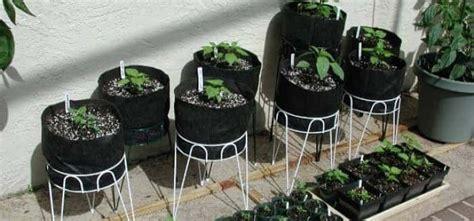 grow vegetables   apartment airtasker blog
