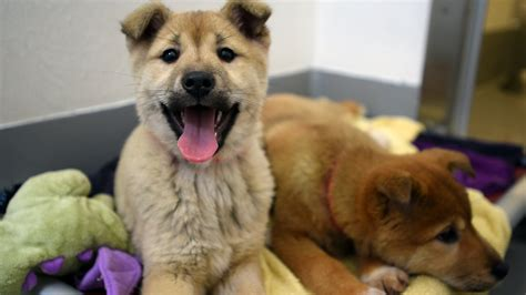 charleston puppies 57 dogs rescued from south korea farm