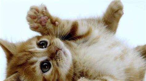 annonces achat chat 224 vendre au qu 233 bec