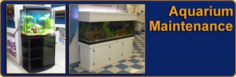 infinity aquarium design las vegas nv aquarium maintenance msnoel com