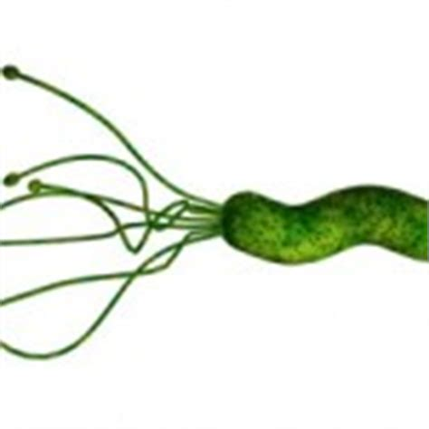 h pylori carbohydrates hypochlorhydria health boundaries