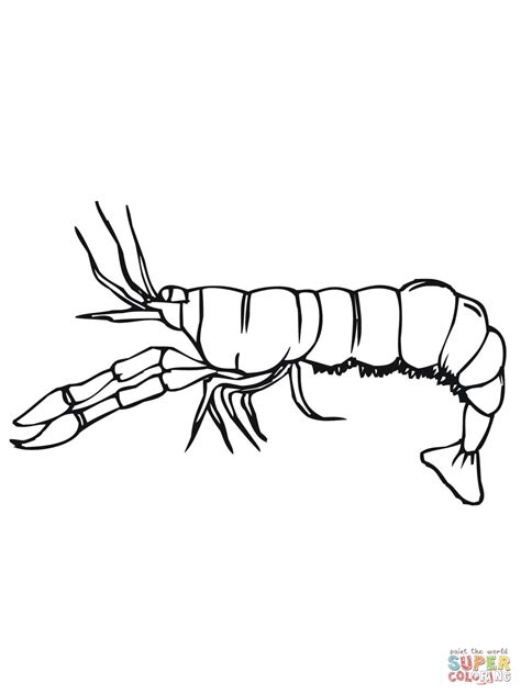 Crawfish Side View Coloring Page Free Printable Coloring Crayfish Coloring Page