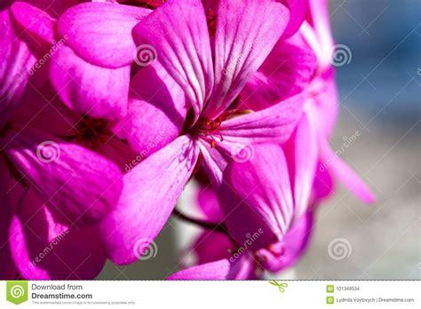 Dreamy Purple beautiful dreamy magic pink purple flowers on faded