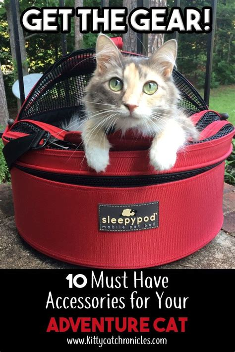 Are Cats The New Must Accessory by The 25 Best Adventure Cat Ideas On What Is