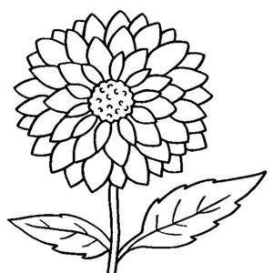desenhos de crisantemos  imprimir  colorir flores