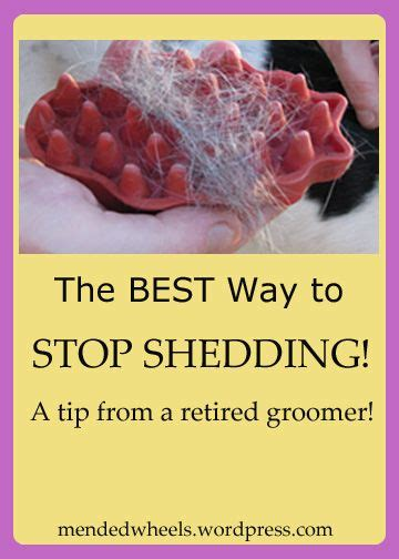 Stop Shedding In Dogs by Sick Of Pet Hair I Guarantee This Stops Shedding Pets