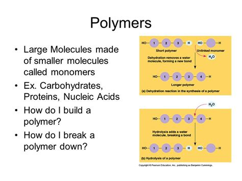 carbohydrates ex a bit of bio chemistry ppt
