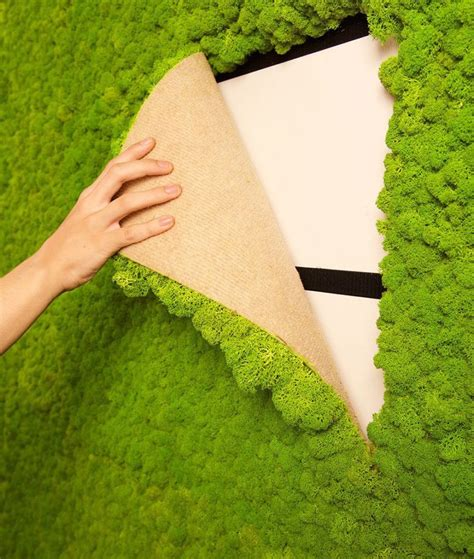 indoor moss is a fuss free way to add a element to