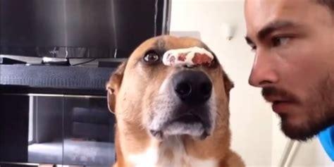 puppy discipline ce chien est d 233 finitivement plus disciplin 233 que vous vid 201 o