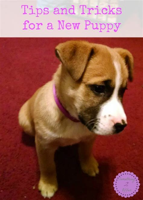 new puppy tips tips and tricks for a new puppy
