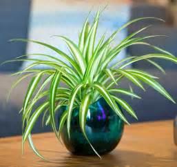 plantes vertes d int 233 rieur pour d 233 corer la table 224 caf 233
