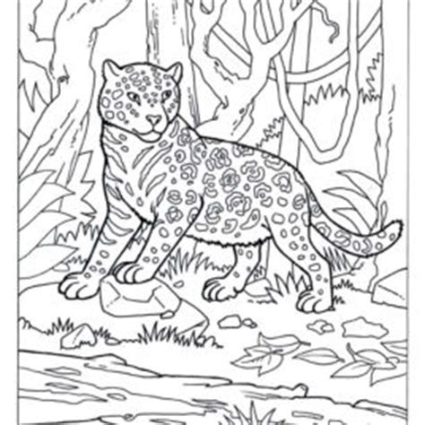camouflaged animals coloring info pages allaboutnature com camo skyland4er free coloring pages