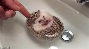 First Years Baby Bathtub White Wolf Cuteness In The Form Of A Hedgehog Bath Video