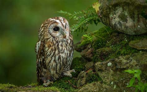 wallpaper cute owl hd cute owl wallpaper hd wallpapersafari