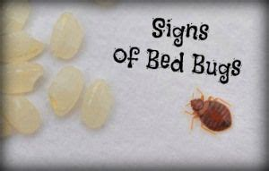 sleeping   signs  bed bugs heres