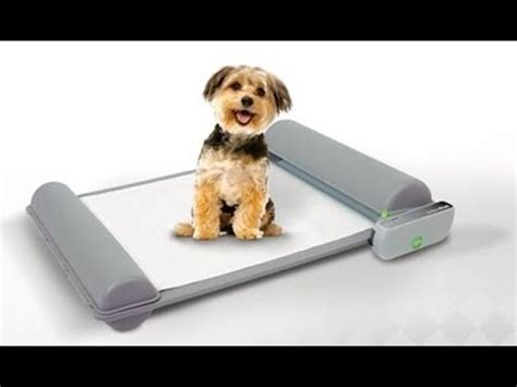 gadgets for pets top 5 gadgets your pet must have 8 cookeryshow com
