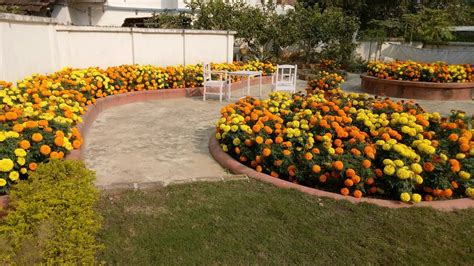 Garden Flowers In India Beautiful Home Made Marigold Flowers Garden Of India Winter Season