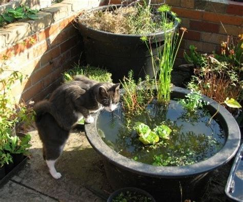 refreshing diy container water gardens shelterness