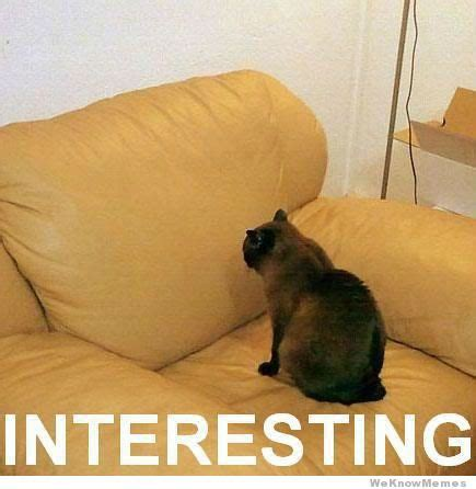 Cat Interesting Meme - interesting cat weknowmemes