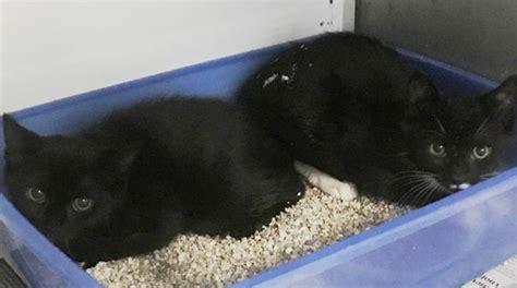 gabbiano savona due gattini abbandonati davanti a quot il gabbiano quot di savona