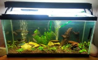 aquarium decor cleaner aquarium