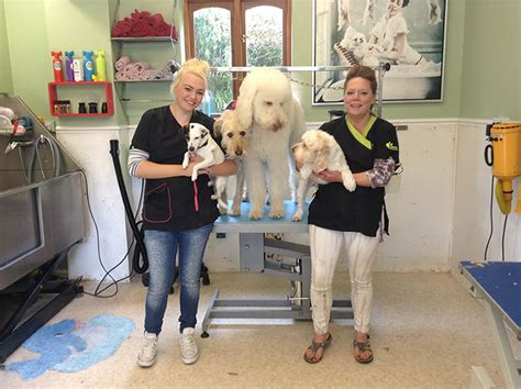 the dog house pet salon dog grooming services dover deal dog house grooming salon