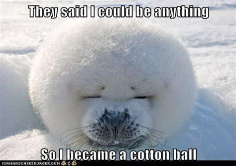Baby Seal Meme - cotton ball seal meme slapcaption com we heart it