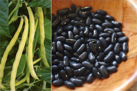 storage crops top  beans  grow   biointensive