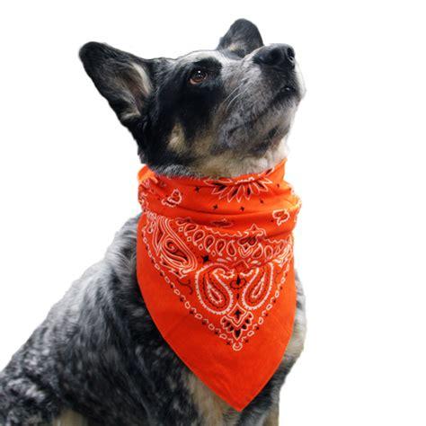 bandanas for dogs paisley pattern bandana images