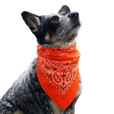 Most Comfortable Boot Paisley Dog Bandana Orange Baxterboo