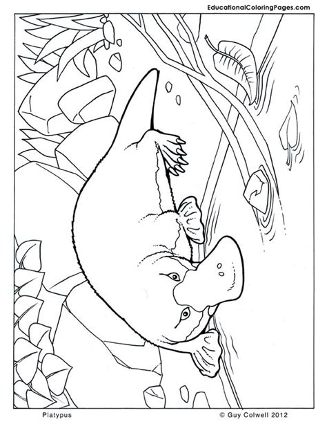 free coloring pages of colour in platypus