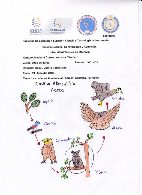 cadenas alimenticias y acuaticas catedra de biologia las cadenas alimenticias a 233 reas